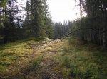 Vid Geologvägen  - <div><em>Foto: Ingela Nyman</em></div> <p></p>