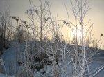 Blek sol - <p>21/10 Det var tyst, det var lugnt, det var kallt och så mycket vinter!</p> <p><em>Foto: Marina Nyman</em></p>
