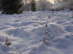 Naturlig puckelpist - <p>21/10 Ren, skön snö som mjuk bomull.</p> <p><em>Foto: Marina Nyman</em></p>