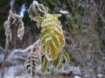 Sista rönnen - <p>21/10 Bara s&aring; vacker, frusen och sk&ouml;r!</p> <p><em>Foto: Marina Nyman</em></p>